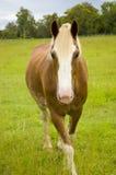 Paard in paddock Stock Foto