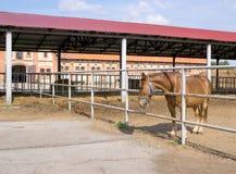 Paard in paddock Royalty-vrije Stock Afbeeldingen