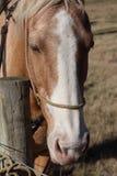 Paard per post Royalty-vrije Stock Foto's