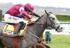 Paard Racing royalty-vrije stock foto