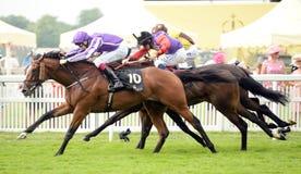 Paard Racing Royalty-vrije Stock Fotografie