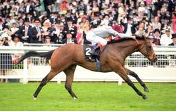 Paard Racing Stock Foto's