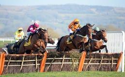 Paard Racing Stock Afbeeldingen