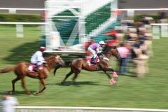 Paard Racing royalty-vrije stock afbeeldingen