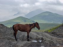 Paard Reis naar de bergen van de Kaukasus in Kabardino-Balkari? stock foto