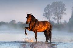 Paard in rivier stock afbeelding