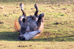 Paard Rolling Stock Fotografie
