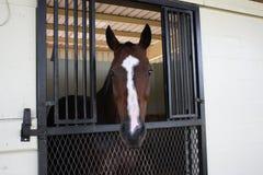 Paard in schuur Royalty-vrije Stock Afbeelding
