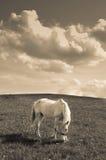 Paard in Sepia Royalty-vrije Stock Foto