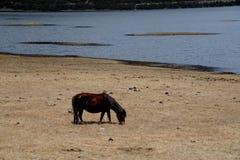Paard shangri-La stock afbeeldingen