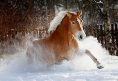 Paard in sneeuw Royalty-vrije Stock Foto