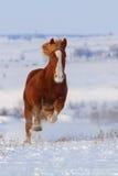 Paard in sneeuw in werking die wordt gesteld die Stock Foto