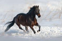 Paard in sneeuw in werking die wordt gesteld die Royalty-vrije Stock Foto's