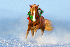 Paard in sneeuw in werking die wordt gesteld die Het beeld van Kerstmis Royalty-vrije Stock Foto's