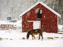 Paard in sneeuwonweer Stock Afbeeldingen