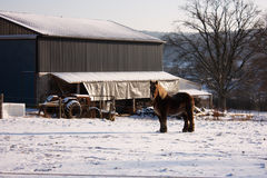 Paard in sneeuwweide Royalty-vrije Stock Fotografie