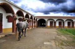 Paard in stabiele werf Stock Afbeeldingen