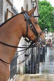 Paard in stad Royalty-vrije Stock Afbeelding