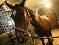 Paard in stal stock afbeeldingen