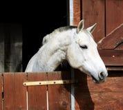 Paard in stal Royalty-vrije Stock Afbeelding