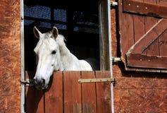Paard in stal Stock Foto's