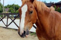Paard in stal op een achtergrond van de zomerlandschap stock afbeelding