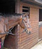Paard in stallen Royalty-vrije Stock Foto