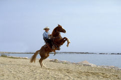 Paard in strand stock afbeeldingen