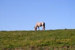 Paard tegen blauwe hemel royalty-vrije stock foto's