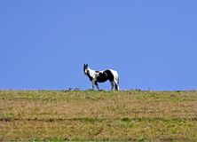 Paard tegen blauwe hemel stock fotografie