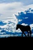 Paard tegen cloudscape Royalty-vrije Stock Afbeelding