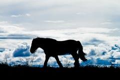 Paard tegen cloudscape Royalty-vrije Stock Foto's