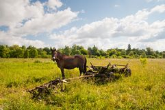 Paard, traditionele Oekraïense kar op een gebied Stock Fotografie