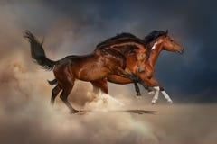 Paard twee stock fotografie