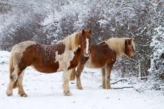 Paard twee op sneeuw Stock Afbeeldingen