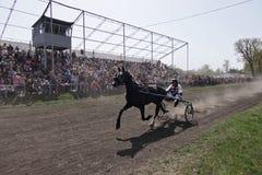 Paard-vakantie in Dibrivtsi, de Oekraïne Stock Foto