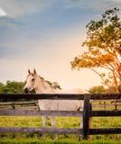 Paard van een landbouwbedrijf stock foto's
