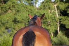 Paard van erachter Stock Fotografie