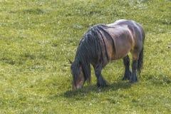 Paard van schrijver uit de klassieke oudheid die in de landbouwbedrijven van Nederland schieten royalty-vrije stock afbeeldingen