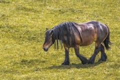 Paard van schrijver uit de klassieke oudheid die in de landbouwbedrijven van Nederland schieten stock fotografie