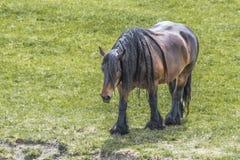 Paard van schrijver uit de klassieke oudheid die in de landbouwbedrijven van Nederland schieten royalty-vrije stock foto's