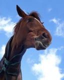 Paard vanuit een lage invalshoek Stock Afbeelding