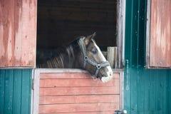 Paard in venster Stock Afbeeldingen