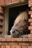 Paard in venster royalty-vrije stock fotografie
