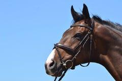 Paard voor blauwe hemel Royalty-vrije Stock Foto