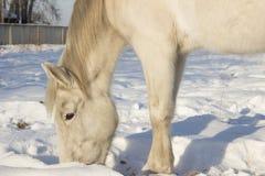 Paard voor een gang Stock Afbeelding