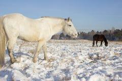 Paard voor een gang Stock Afbeeldingen
