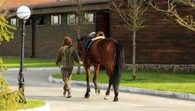 Paard voor een gang in het park Stock Afbeeldingen