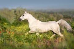 Paard vrije looppas op groen gebied royalty-vrije stock foto's