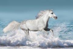Paard in water stock foto